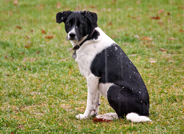 Lucy in Rain and Snow