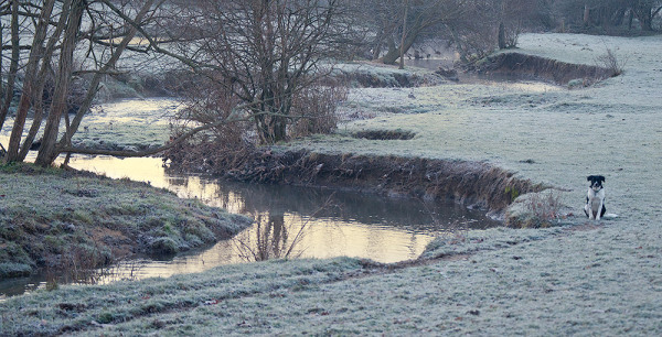 Lucy by the Creek on a Frosty Morning