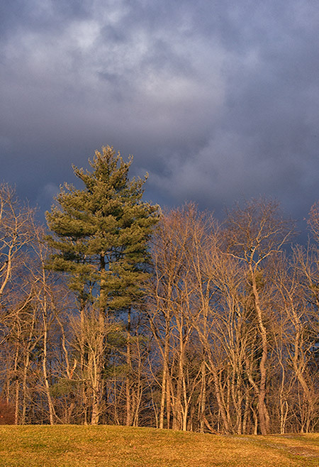 Lonesome Pine in the Morning Sun