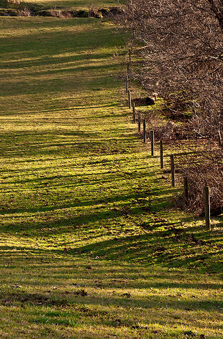 Morning Light on the Fence Line