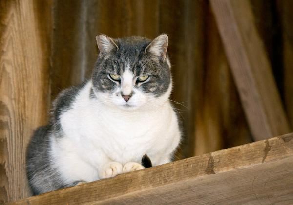 Harpo, A Barn Cat