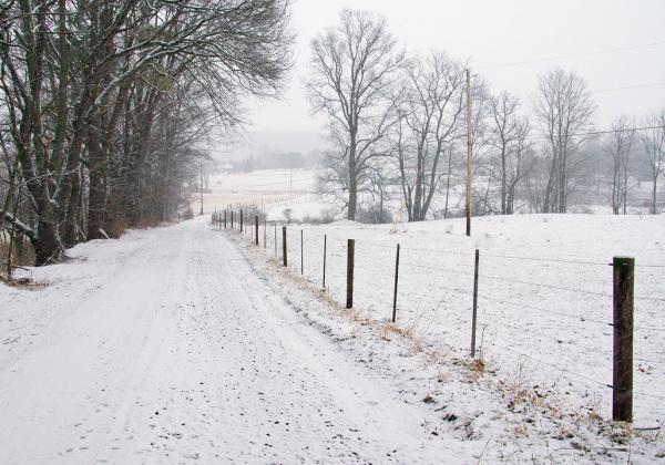 Fence Along the Farm Lane