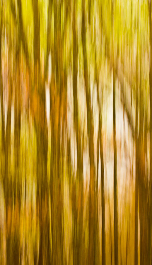 Motion blur of spring light