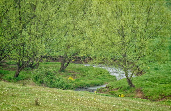 Spring, Halfmoon Creek