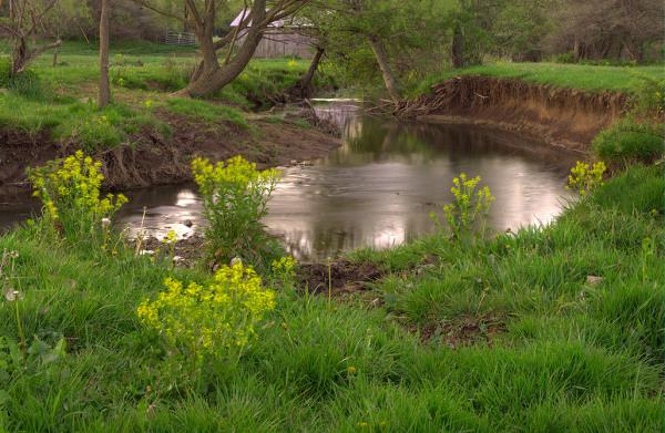 Morning, Halfmoon Creek