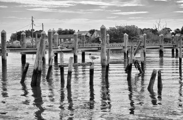 Gulls on a Pier