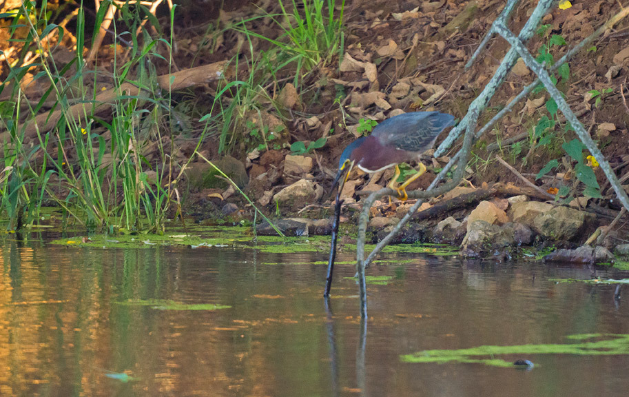 Green Heron Fishing Tool