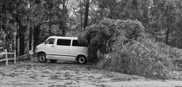 Church Van Damaged by Falling Tree