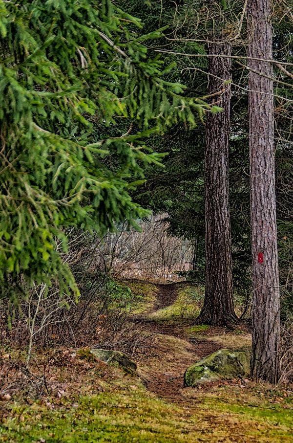 Star Mill Trail, Black Moshannon State Park