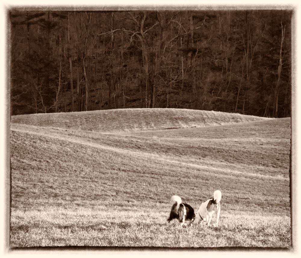 dogs, Walnut Hill Farm