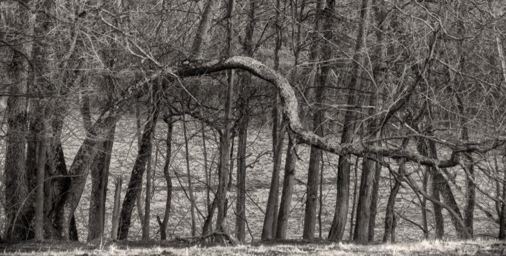 Tree, Walnut Hill Farm