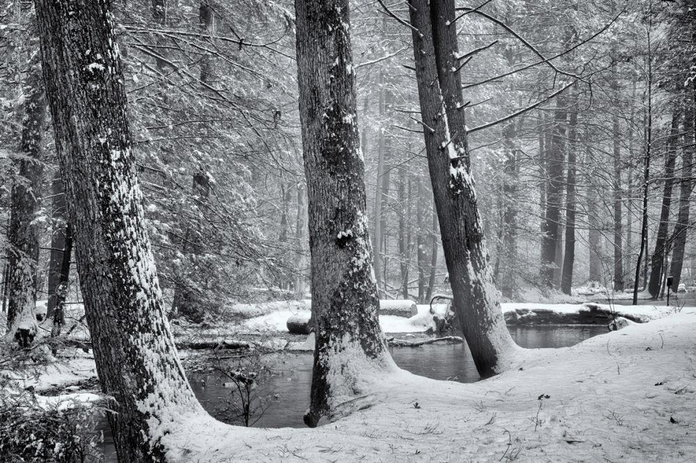 Hemlocks, Caledonia State Park, Pennsylvania