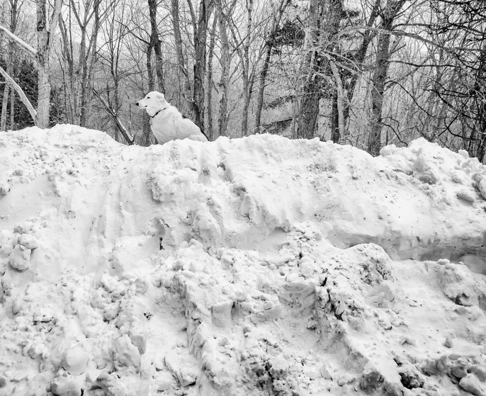 Reggie in Winter Storm Juno