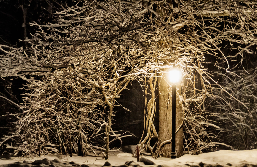 Lamp Light Under Snow-Covered Tree