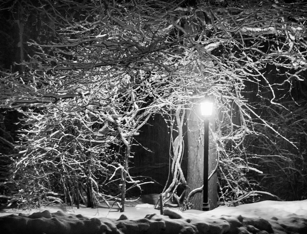 Street Light Under Snow-Covered Tree