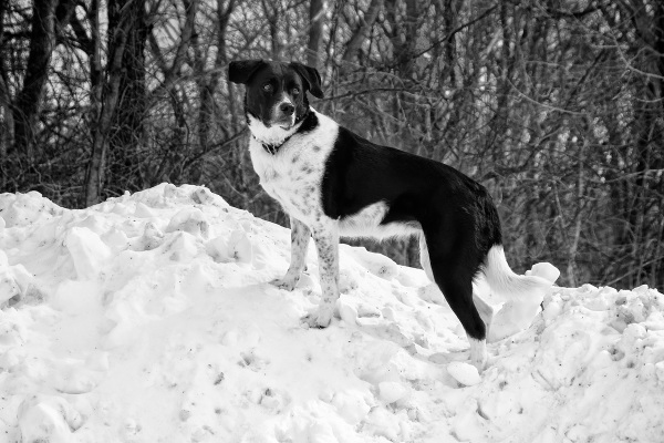 Lucy, Queen of the Snow Pile