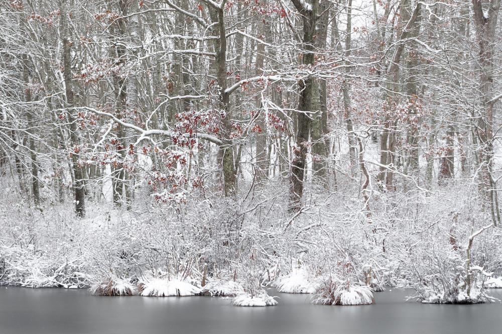 Snowy Shore of California Jim's Pond
