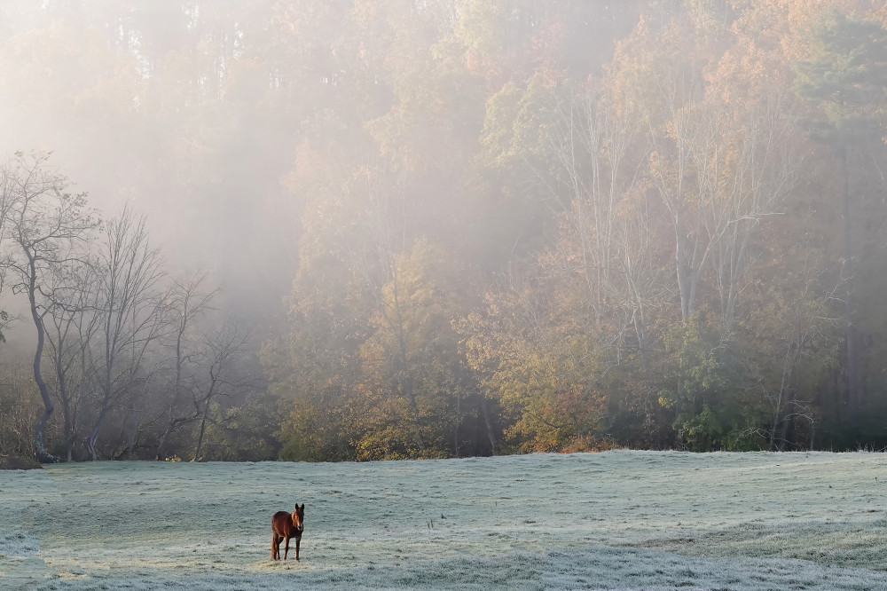 Mule in the Pasture on an Autumn Morning
