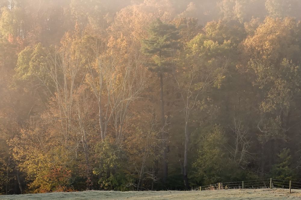 Fall colors in the pasture