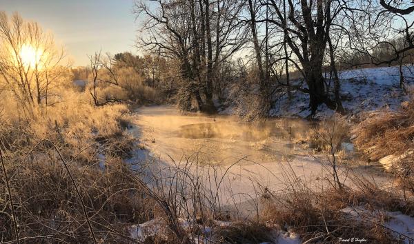 Ducks on little pond in the morning mist