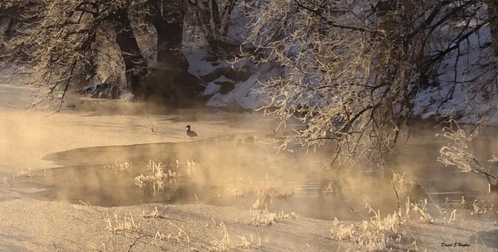 Ducks on Pond on Misty Morning