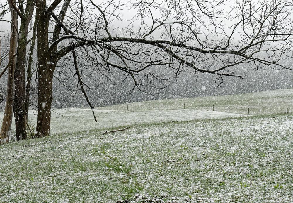 Spring Snow Storm, Walnut Hill Farm