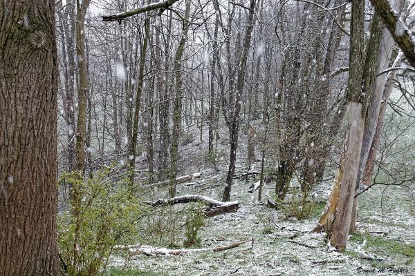 Heavy Spring Snow on the Escarpment