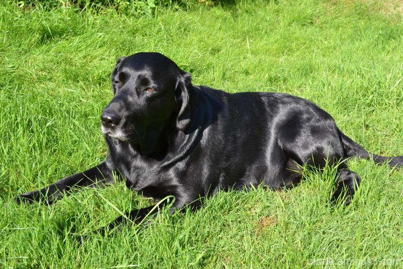 Max in the grass