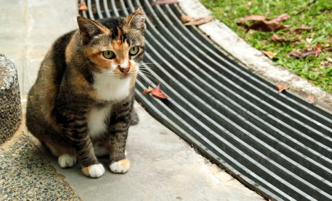 stray cat by the drain