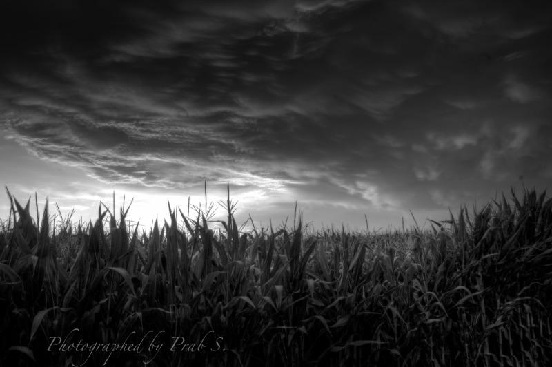 Dramatic Clouds & Corn
