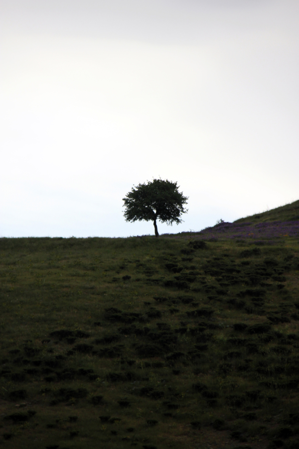 trees are alone, its a modern life-2