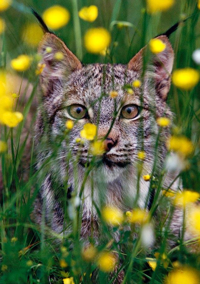 Cat Beautiful....