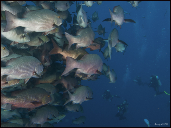 Mural de peces