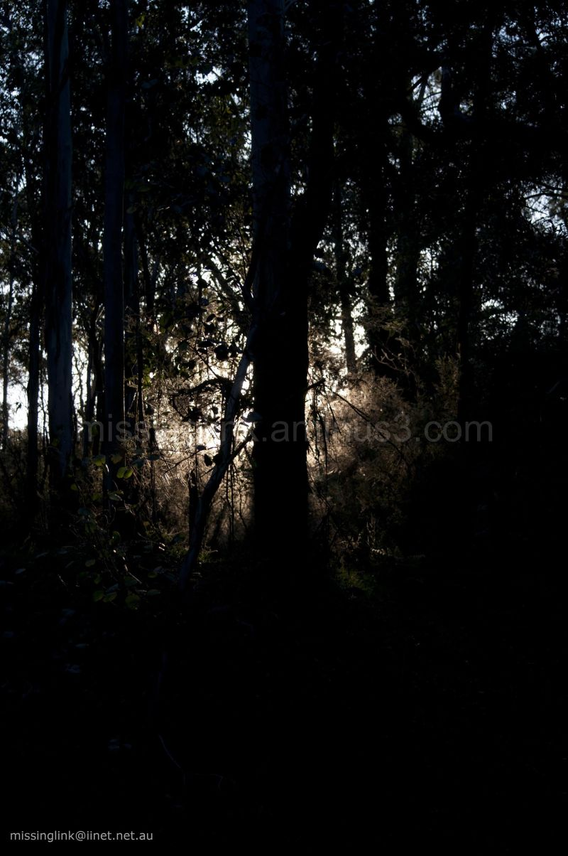 At dusk in the Aussie bush