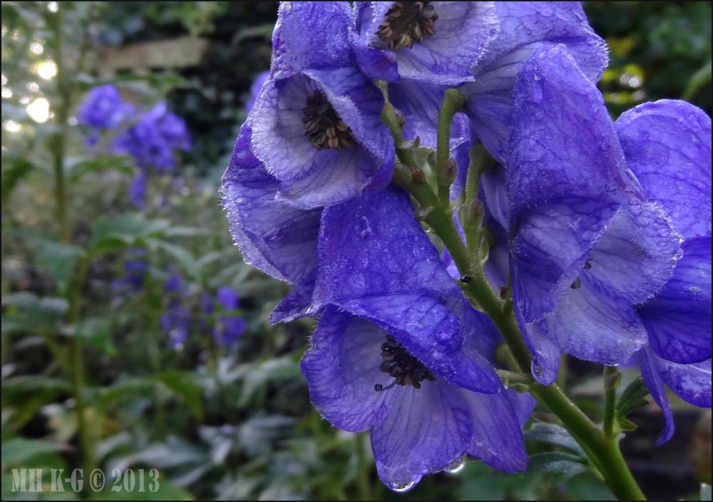 Eén van de laatste bloeiers