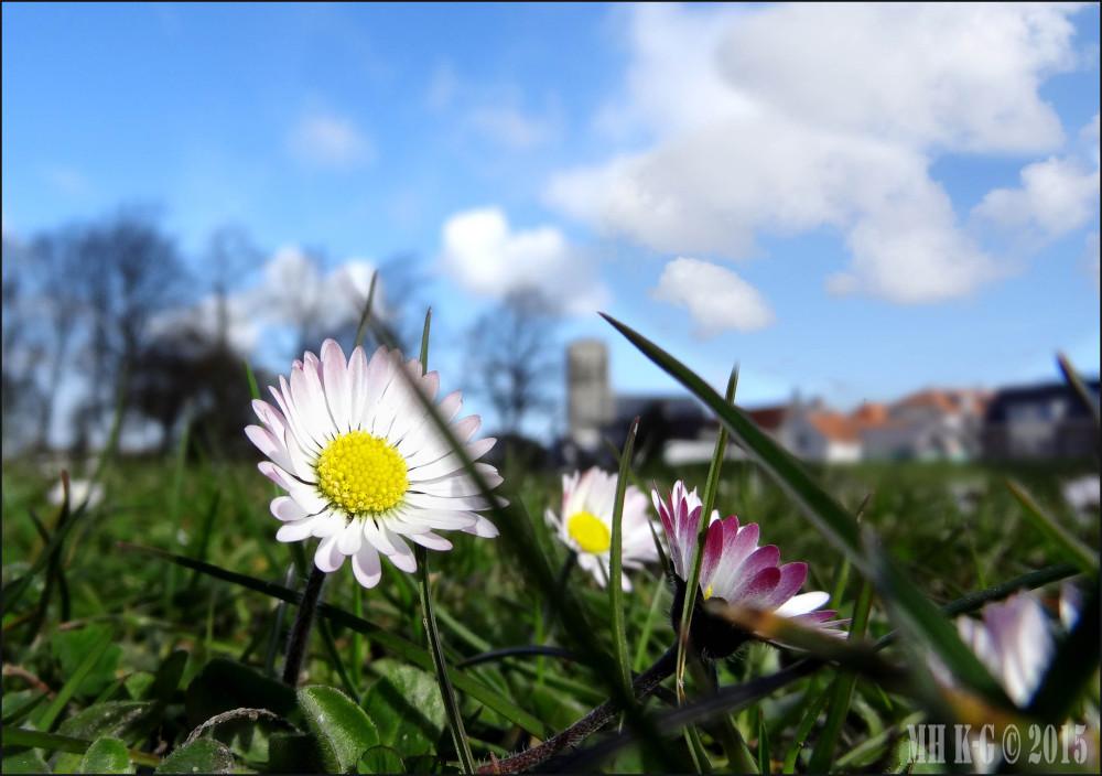 Voorjaar in Brielle