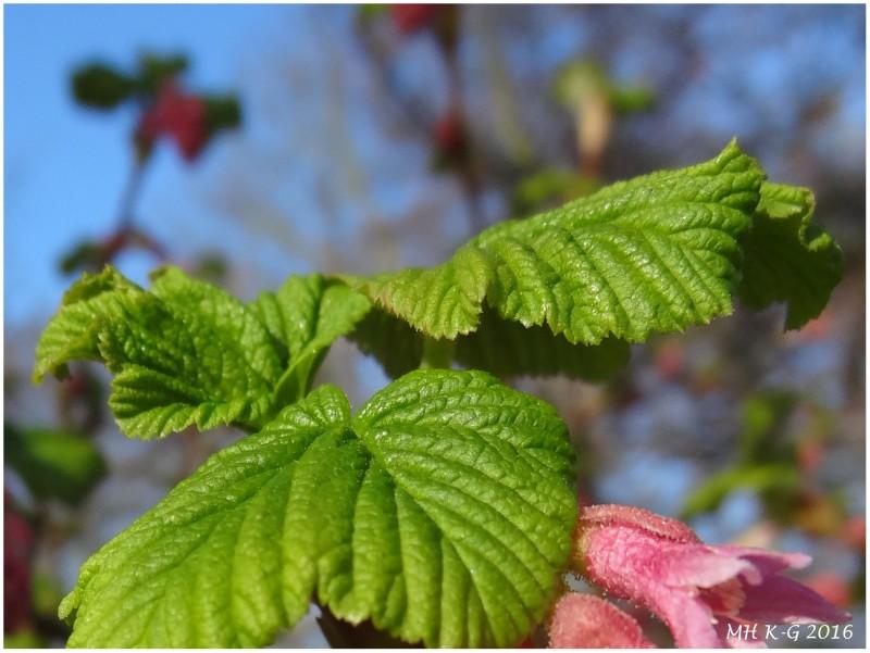De lente ontvouwt zich  : 1