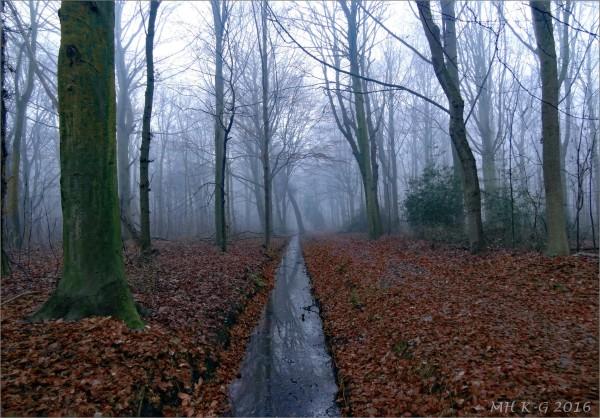 Winterbos/Winterforest
