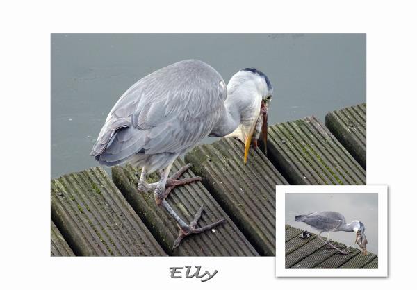 Guestfotographer Elly (3)