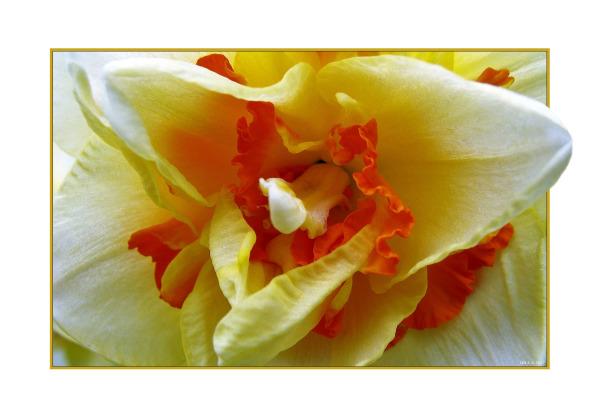 Yellow : 1 of 3