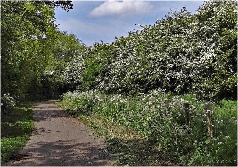 The hawthorn-path : 2/2