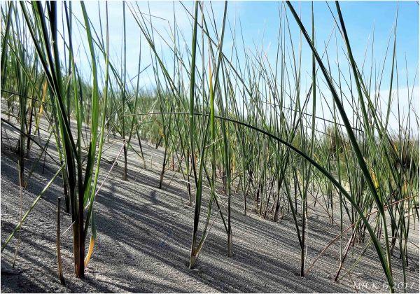 Voornse dunes