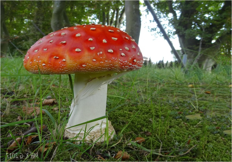 Thè mushroom of all mushrooms ! (1/2)