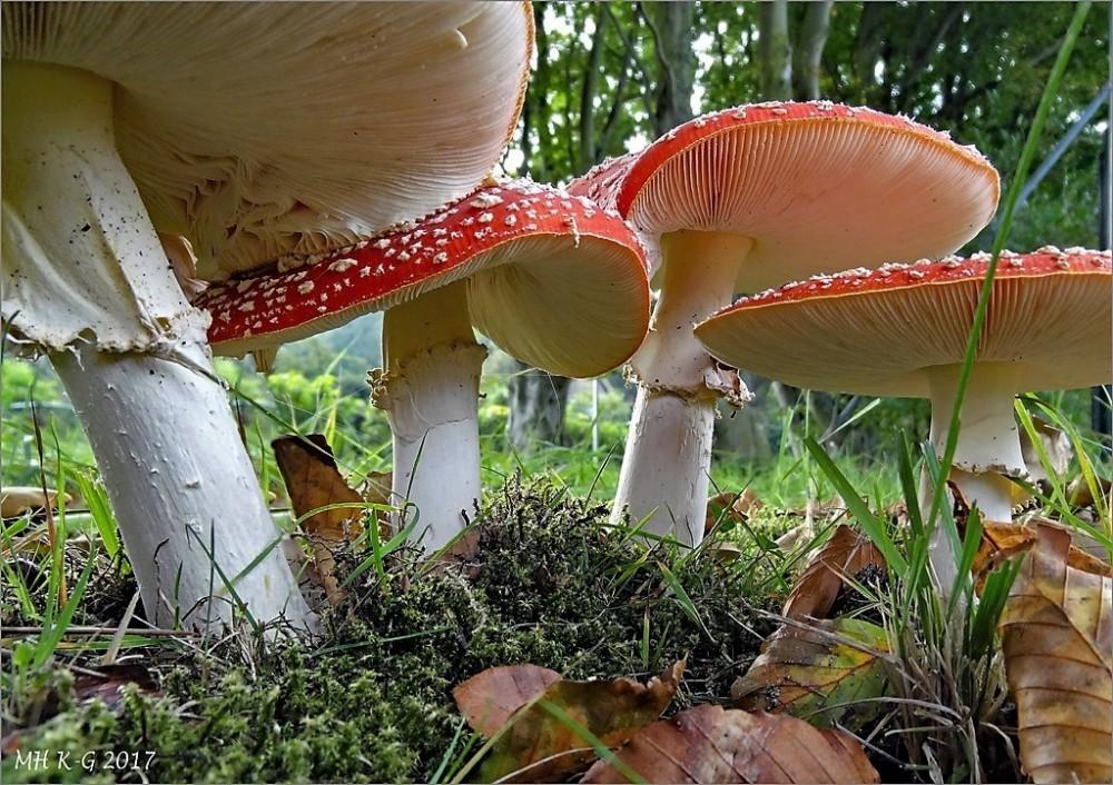 A mushroom village (2/2)