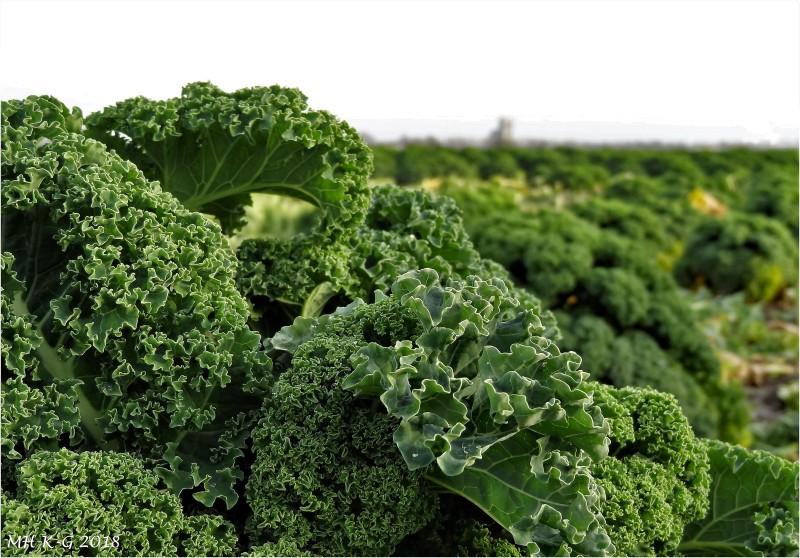 Winter-vegetables  : 1/2