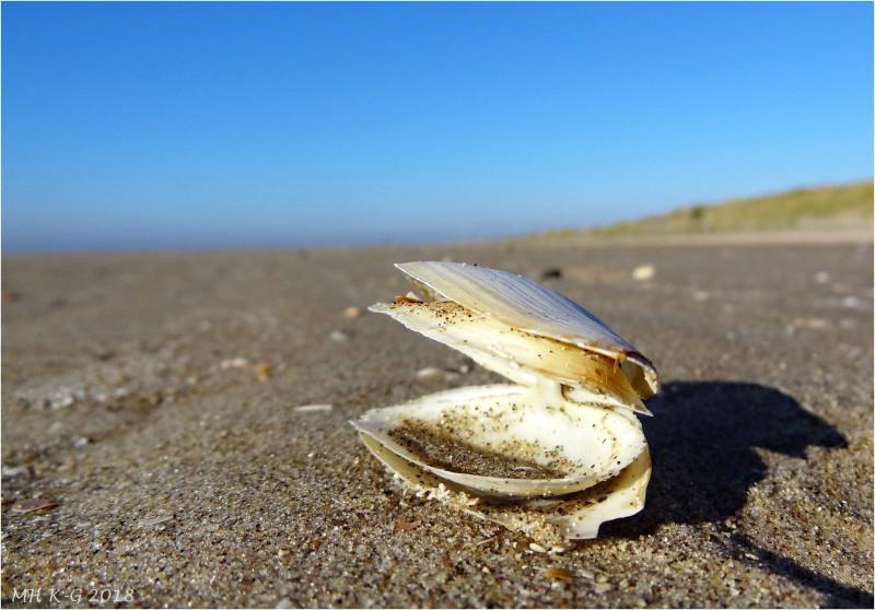 Twin shell