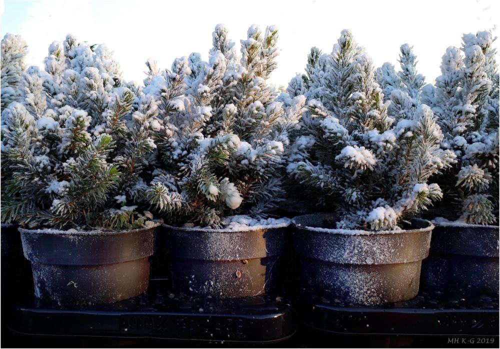 Snow/sneeuw