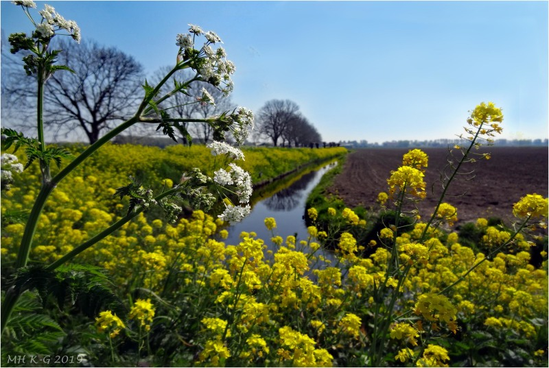On the isle of Voorne the color is yellow now !