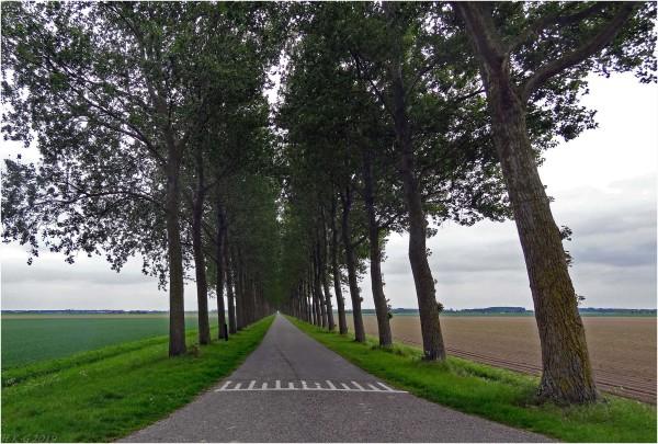 An endless polder road