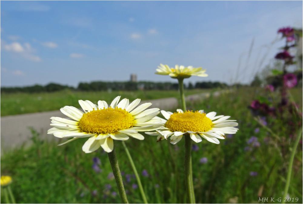 The flowering roadside : 2